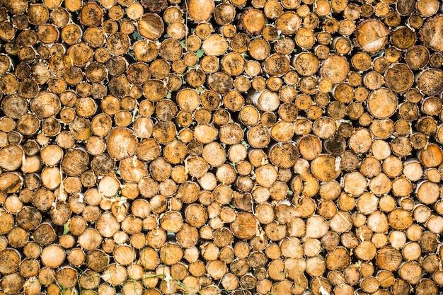 Árvores redondas de madeira de teca círculo tocos grupo cortado. desmatamento.