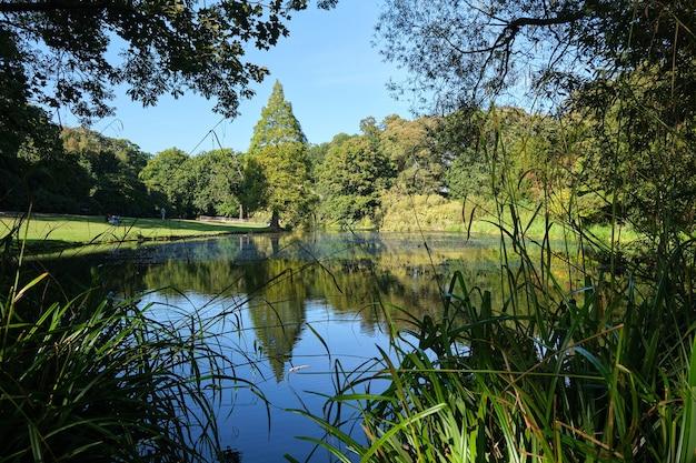 Árvores refletindo em um pequeno lago sob a luz do sol durante o dia