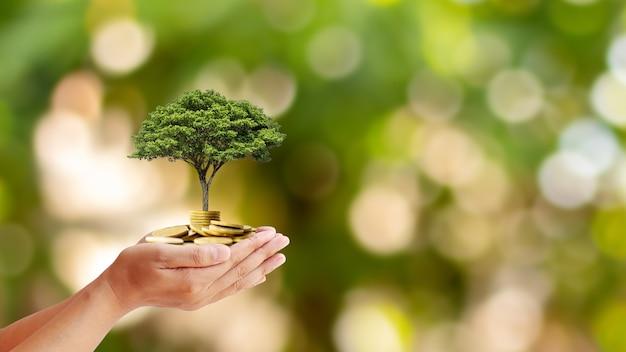 Árvores são plantadas em moedas em mãos humanas com fundos naturais borrados, idéias de crescimento de plantas e investimentos ecológicos.