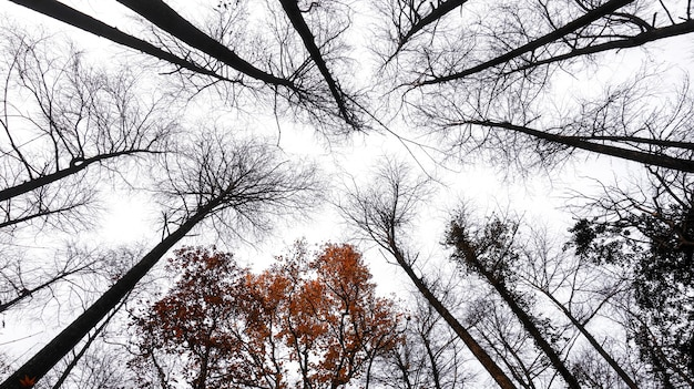 Árvores secas em fundo branco