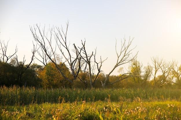 Árvores secas em pé no campo. luz do sol.