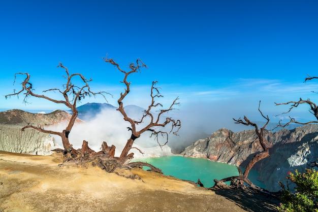 Árvores secas em uma paisagem rochosa com um lago no fundo
