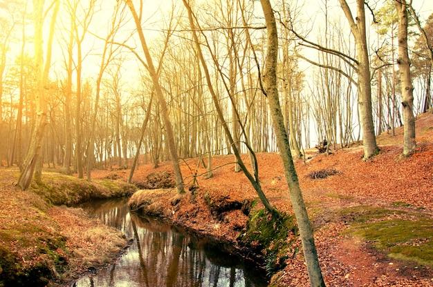 Árvores secas perto de um rio