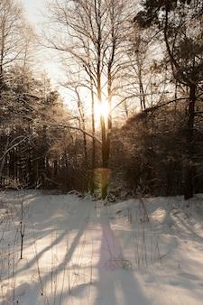 Árvores sem folhagem no inverno Foto Premium
