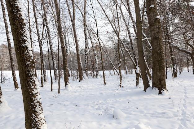 Árvores sem folhagem