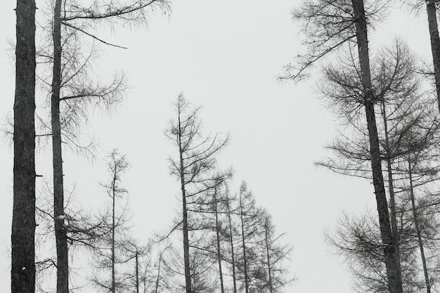 Árvores sem folhas na floresta