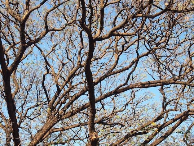 Árvores sem folhas