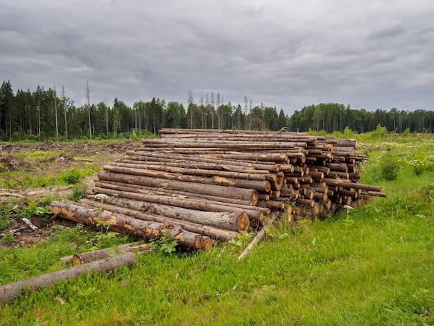 Árvores serradas caem em uma grande pilha no fundo da floresta
