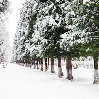 Árvores sob a neve no beco do parque