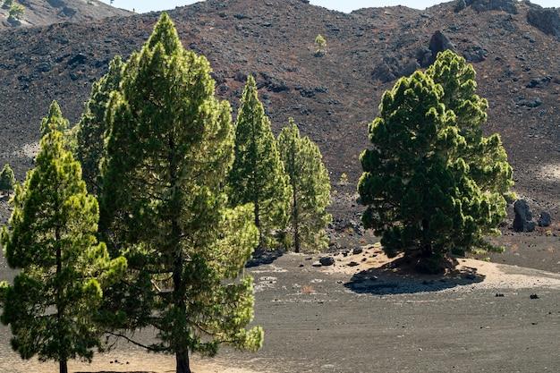 Árvores solitárias em solo vulcânico