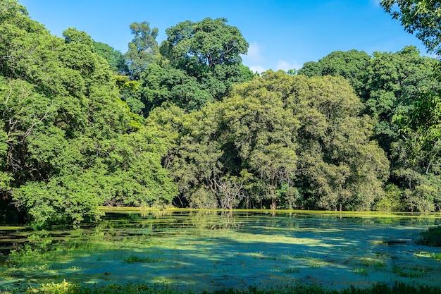 Árvores tropicais verdes em um lago com reflexo, tanzânia, áfrica oriental