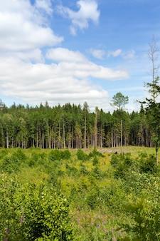 Árvores velhas e floresta jovem são plantadas