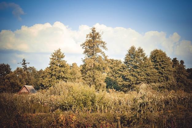 Árvores verdes, arbustos, grama e céu de verão com nuvens brancas