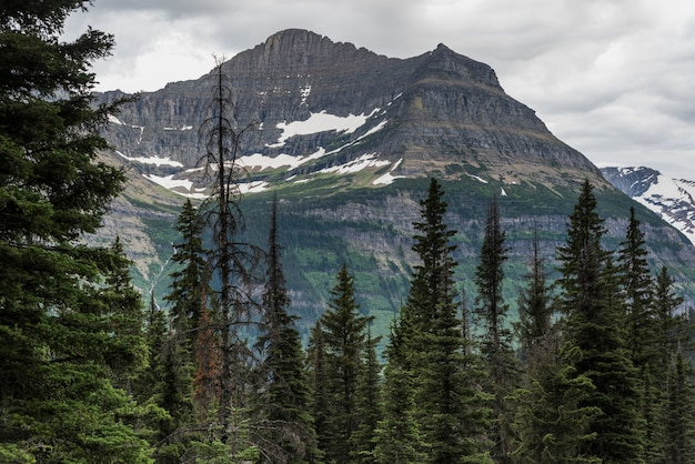 Árvores verdes, com, alcance montanha, em, a, fundo, going-to-the-sun, estrada, parque nacional geleira,