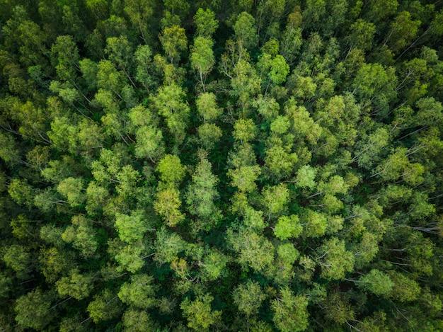 Árvores verdes de vista superior aérea de perspectiva