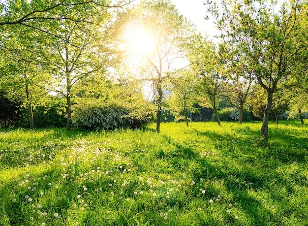 Árvores verdes e grama em dia de sol