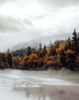 Árvores verdes e marrons perto da montanha durante o dia