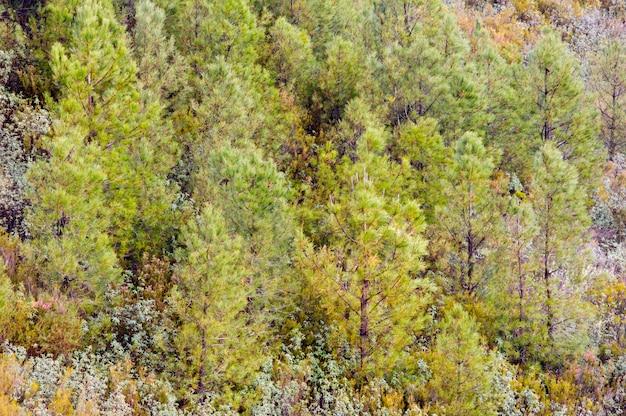Árvores verdes e preciosas em uma linda floresta
