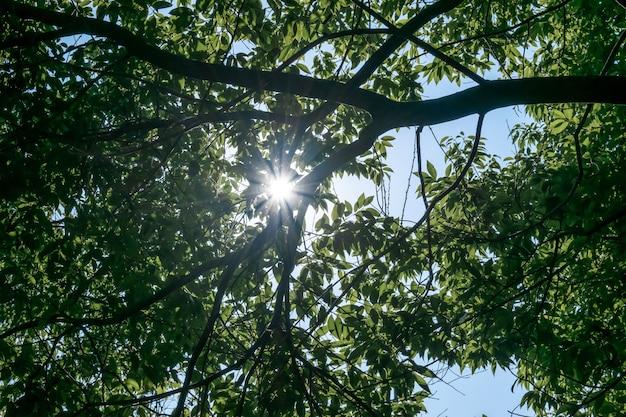 Árvores verdes em um dia ensolarado, o sol atravessando as copas das árvores