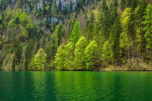 Árvores verdes, refletindo no lago