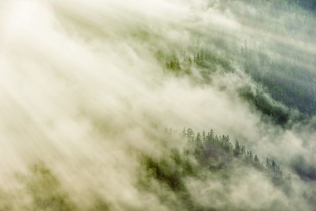 Árvores verdes sob nuvens brancas