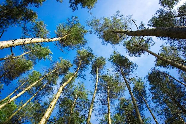 Árvores visto de baixo