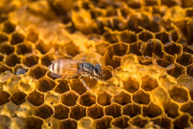 As abelhas que trabalham no favo de mel da natureza com mel doce.