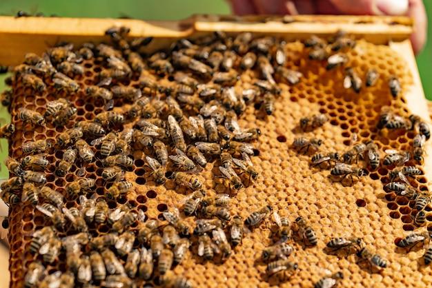 As abelhas se sentam em uma moldura de madeira de favo de mel no verão / close-up