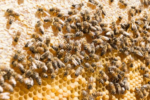 As abelhas selam o mel no pente.