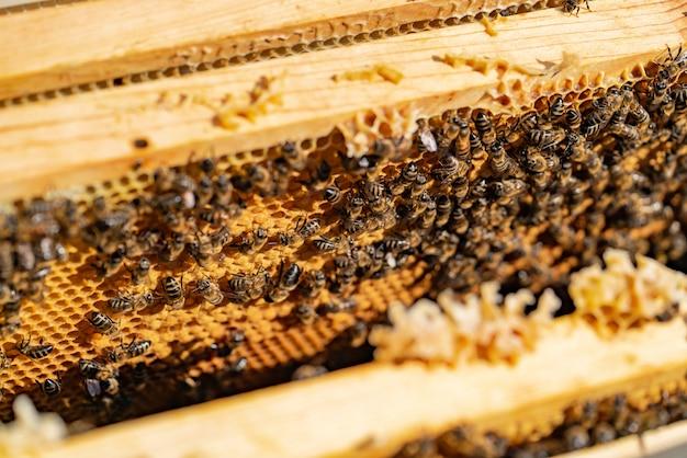 As abelhas trabalhadoras levam mel ao favo de mel em um clima quente no verão