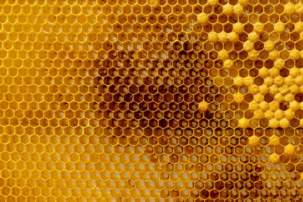 As abelhas trabalham no favo de mel. padrão de células de mel.