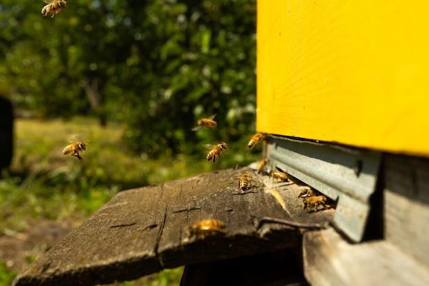 As abelhas voam para a colmeia e carregam pólen uma após a outra nos dias de verão