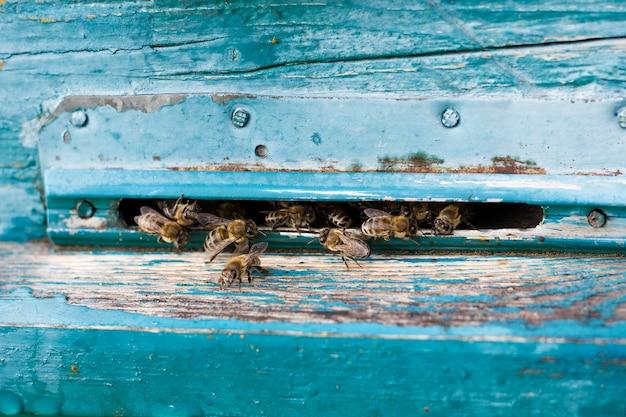 As abelhas voam para fora da evidência