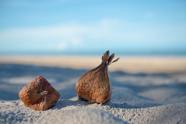 As artes abstratas da palma de coco frutificam na praia para o fundo.
