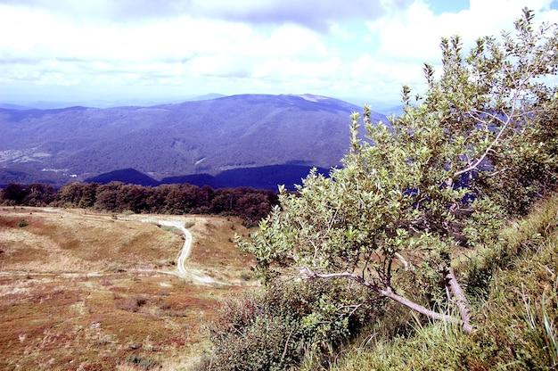 As árvores crescem na encosta de uma montanha em um dia de verão, o filtro.
