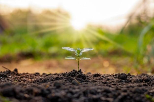 As árvores crescem naturalmente em solos de boa qualidade, conceito de plantio de árvores, restauração florestal sustentável e de qualidade.