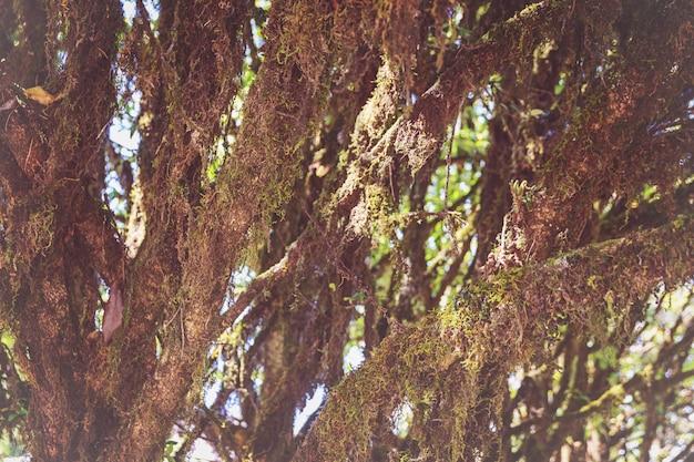 As árvores da floresta têm musgos e samambaias ao longo do tronco.