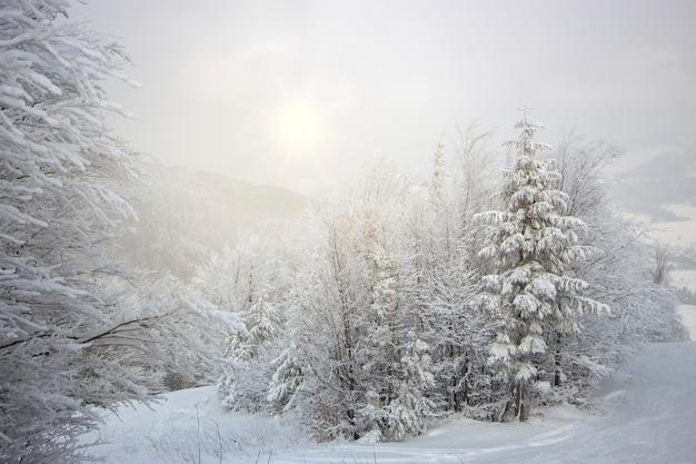 As árvores estão cobertas de neve no alto das montanhas, neblina leve e o sol rompendo as nuvens.