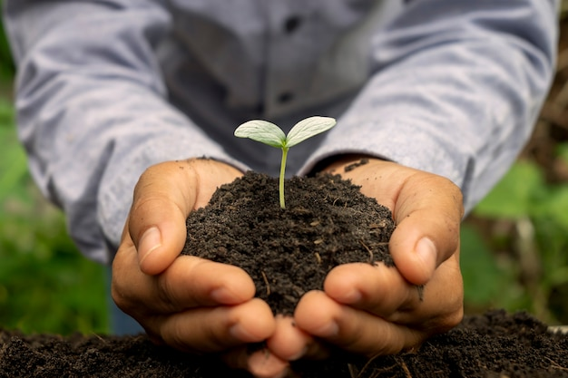 As árvores estão crescendo no solo em mãos humanas, conceito do dia da terra e campanha de aquecimento global.