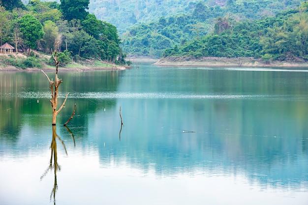As árvores morrem em água e montanha em wang bon dam nakhon nayok, tailândia
