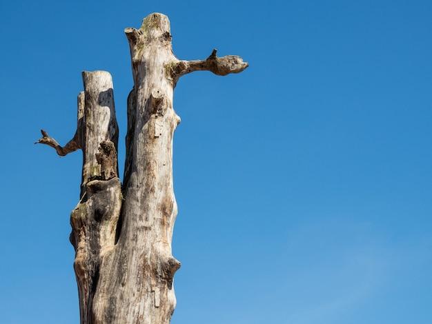 As árvores mortas contrastam com um céu azul brilhante