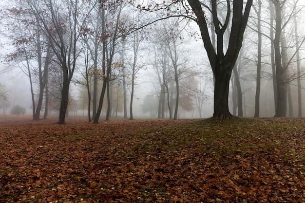As árvores que crescem no parque na temporada de outono em um pequeno nevoeiro