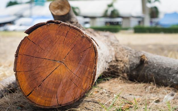 As árvores são cortadas em pedaços.