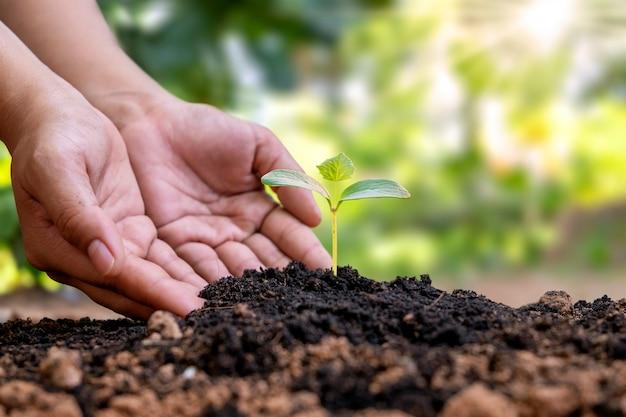 As árvores são plantadas no solo e as mãos das pessoas cuidam e protegem as árvores