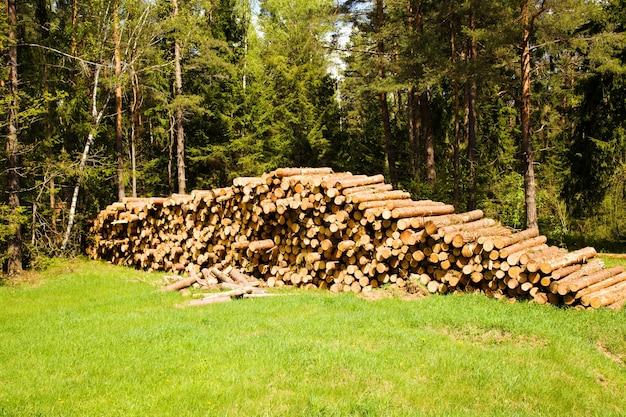 As árvores serradas usadas para toras