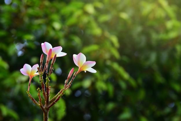 As belas flores do jardim estão florescendo em várias cores e parecem refrescantes.
