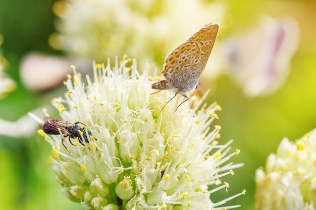 As borboletas sentam-se em flores em um fundo natural verde