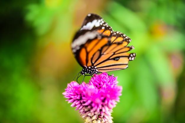 As borboletas voam para as ilhas de flores no meio da natureza.