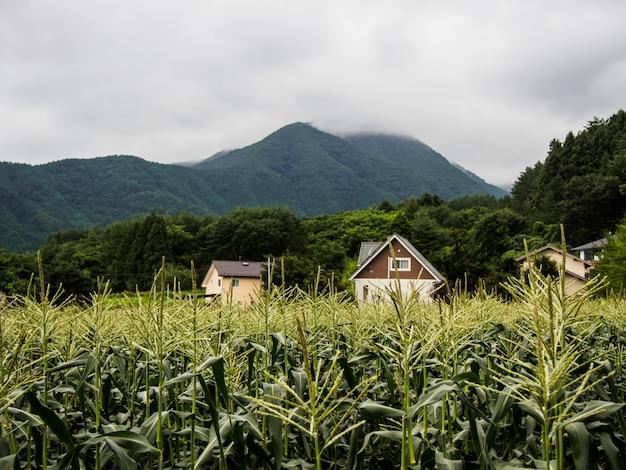 As casas no campo de milho na montanha com o céu