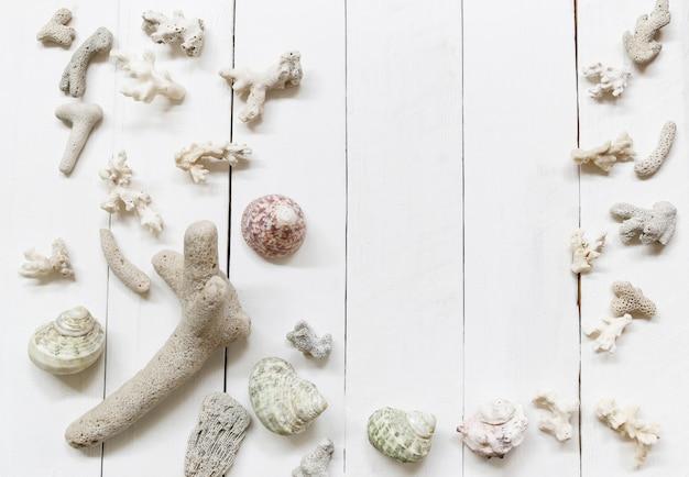 As conchas do mar e os recifes de corais no fundo de madeira branco e têm o espaço da cópia.
